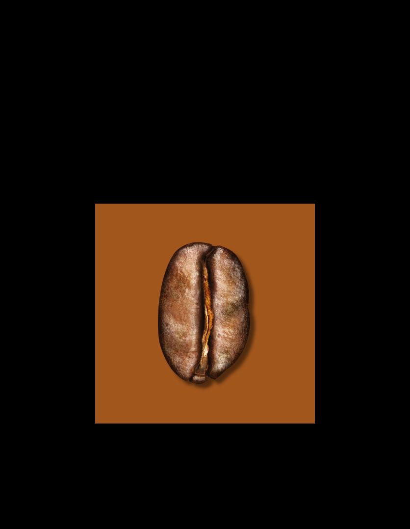 Bean Medium