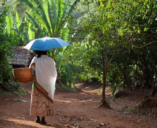 Donna nelle piante di caffè
